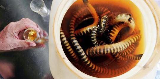 Đến Quảng Bình uống tiết mãng xà biển, ăn gỏi thủy quái - Ảnh 1.