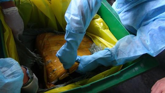 Gần 14 tấn vú heo thối của Trung Quốc suýt vào nhà hàng - Ảnh 2.