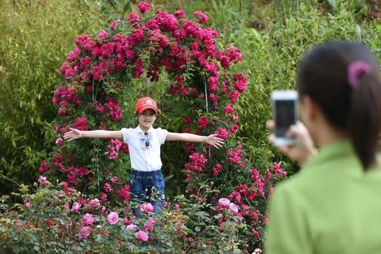 Ngàn gốc hồng cổ nở tưng bừng dưới chân núi, đến Fansipan chẳng muốn về - Ảnh 6.
