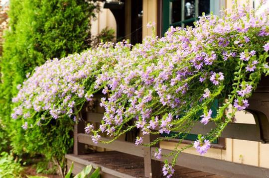Ban công tràn ngập sắc hè nhờ trang trí với hoa tươi - Ảnh 2.