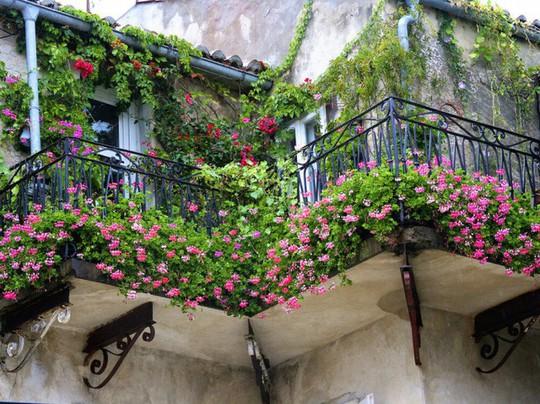 Ban công tràn ngập sắc hè nhờ trang trí với hoa tươi - Ảnh 4.
