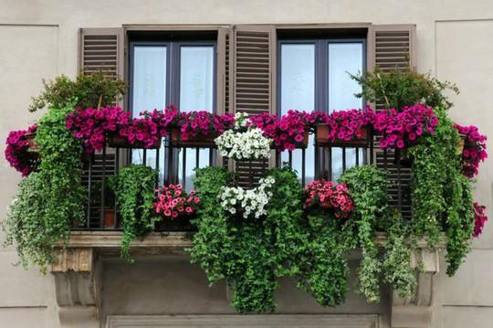Ban công tràn ngập sắc hè nhờ trang trí với hoa tươi - Ảnh 6.
