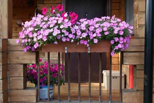 Ban công tràn ngập sắc hè nhờ trang trí với hoa tươi - Ảnh 7.