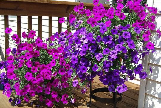 Ban công tràn ngập sắc hè nhờ trang trí với hoa tươi - Ảnh 8.