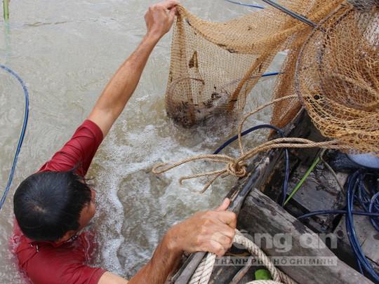 Quái kiệt săn cá ngát trên sông Hàm Luông - Ảnh 3.
