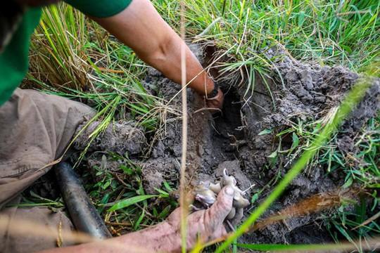 Cao thủ ngao du khắp Sài Gòn săn rắn, bắt chuột - Ảnh 6.