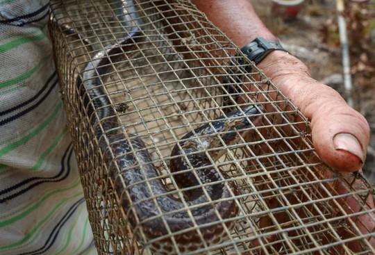 Cao thủ ngao du khắp Sài Gòn săn rắn, bắt chuột - Ảnh 11.
