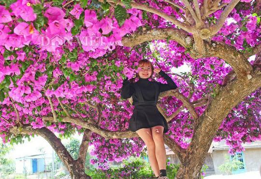 Sốt rần rần với cây hoa giấy khổng lồ siêu đẹp ở Đà Lạt - Ảnh 7.