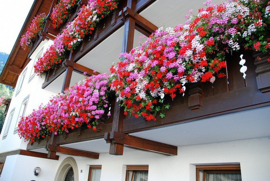 Ngất lịm với những ban công rực rỡ sắc hoa mùa hè - Ảnh 2.