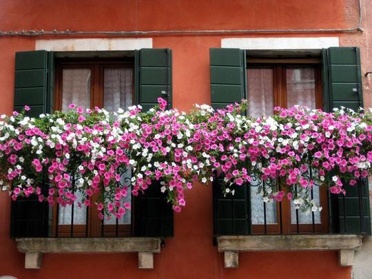 Ngất lịm với những ban công rực rỡ sắc hoa mùa hè - Ảnh 11.