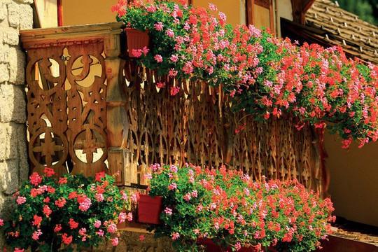 Ngất lịm với những ban công rực rỡ sắc hoa mùa hè - Ảnh 12.