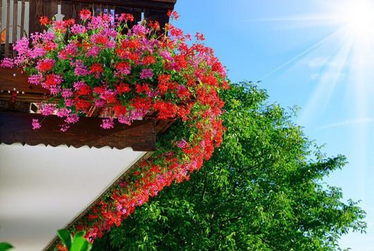 Ngất lịm với những ban công rực rỡ sắc hoa mùa hè - Ảnh 13.