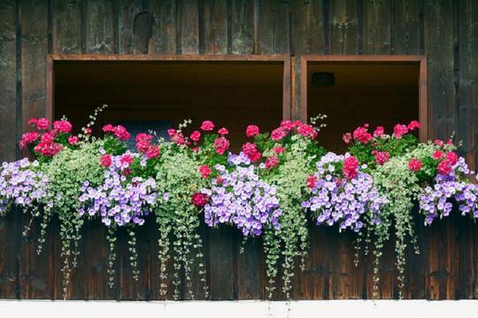Ngất lịm với những ban công rực rỡ sắc hoa mùa hè - Ảnh 14.