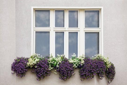 Ngất lịm với những ban công rực rỡ sắc hoa mùa hè - Ảnh 16.