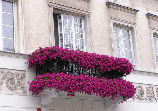 Ngất lịm với những ban công rực rỡ sắc hoa mùa hè - Ảnh 3.