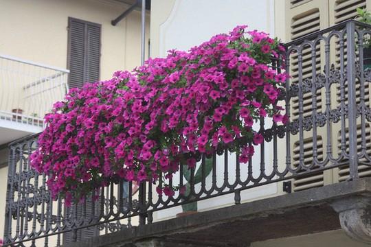 Ngất lịm với những ban công rực rỡ sắc hoa mùa hè - Ảnh 4.