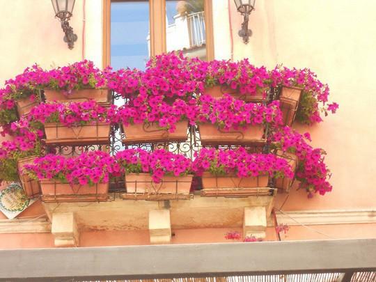 Ngất lịm với những ban công rực rỡ sắc hoa mùa hè - Ảnh 10.