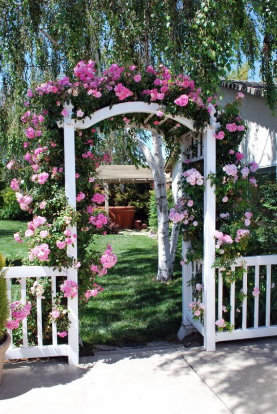 Khu vườn trở nên lãng mạn nhờ cổng vòm rực rỡ sắc hoa - Ảnh 1.