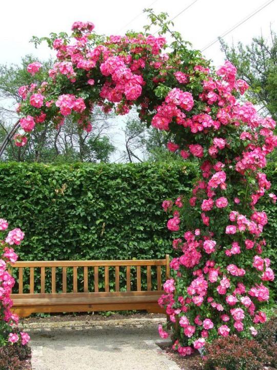 Khu vườn trở nên lãng mạn nhờ cổng vòm rực rỡ sắc hoa - Ảnh 6.
