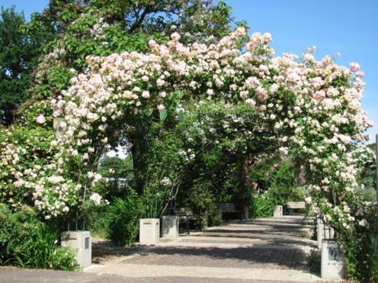 Khu vườn trở nên lãng mạn nhờ cổng vòm rực rỡ sắc hoa - Ảnh 7.