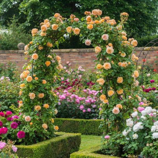 Khu vườn trở nên lãng mạn nhờ cổng vòm rực rỡ sắc hoa - Ảnh 8.