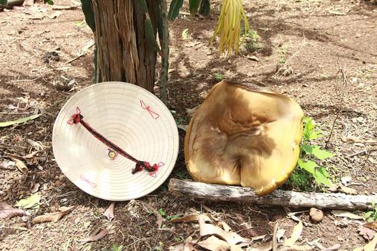 Cây nấm lạ sau ít giờ xuất hiện đã phát triển thành nấm khổng lồ - Ảnh 2.