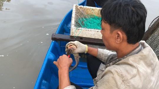 Săn cá ngát đêm ở Sài Gòn - Ảnh 14.
