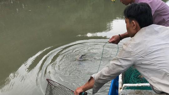 Săn cá ngát đêm ở Sài Gòn - Ảnh 8.