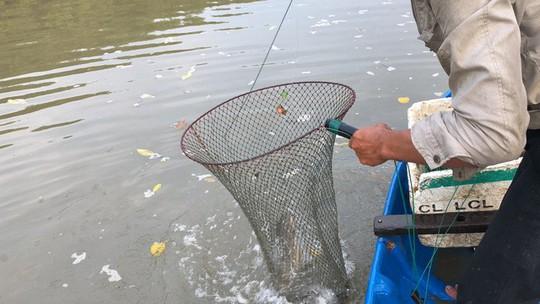 Săn cá ngát đêm ở Sài Gòn - Ảnh 9.
