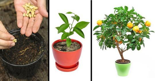 8 loại cây ăn quả nên trồng trong nhà mình - Ảnh 1.