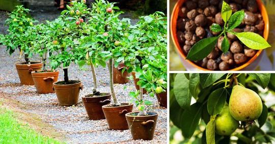 8 loại cây ăn quả nên trồng trong nhà mình - Ảnh 4.