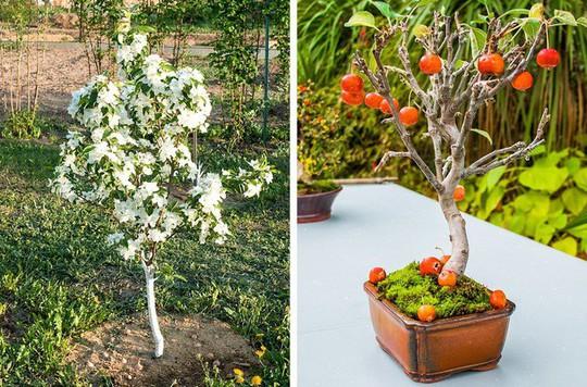 8 loại cây ăn quả nên trồng trong nhà mình - Ảnh 5.