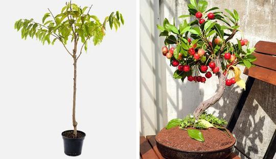 8 loại cây ăn quả nên trồng trong nhà mình - Ảnh 7.