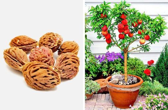 8 loại cây ăn quả nên trồng trong nhà mình - Ảnh 8.