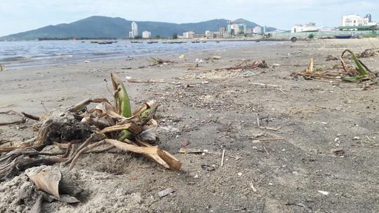 Đà Nẵng: Hơn 5km bờ biển Nguyễn Tất Thành bị rác thải bủa vây - Ảnh 5.