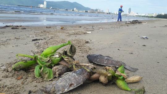 Đà Nẵng: Hơn 5km bờ biển Nguyễn Tất Thành bị rác thải bủa vây - Ảnh 6.