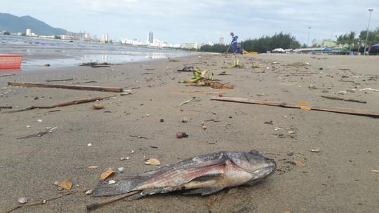 Đà Nẵng: Hơn 5km bờ biển Nguyễn Tất Thành bị rác thải bủa vây - Ảnh 7.