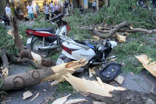 Hà Nội: Cây phượng bất ngờ đổ, đè ập lên 5 người đi đường - Ảnh 1.