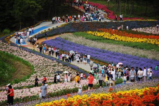 Độc đáo những lễ hội xứ sở Kim chi - Ảnh 4.