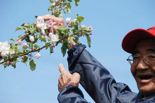 Vườn táo đẹp như cổ tích của cụ ông người Nhật  - Ảnh 11.