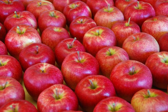 Vườn táo đẹp như cổ tích của cụ ông người Nhật  - Ảnh 14.