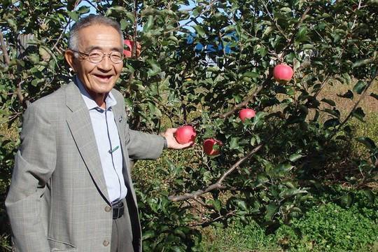 Vườn táo đẹp như cổ tích của cụ ông người Nhật  - Ảnh 3.