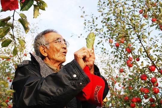 Vườn táo đẹp như cổ tích của cụ ông người Nhật  - Ảnh 4.