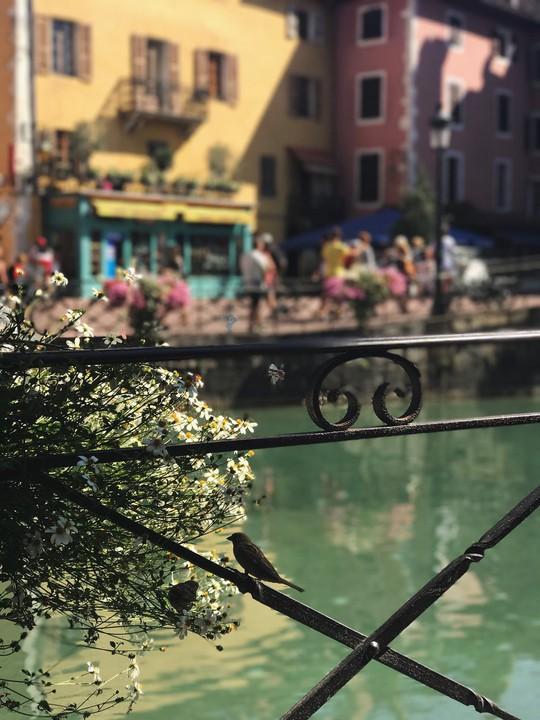 Khám phá Annecy – 'Venice của nước Pháp' - Ảnh 9.