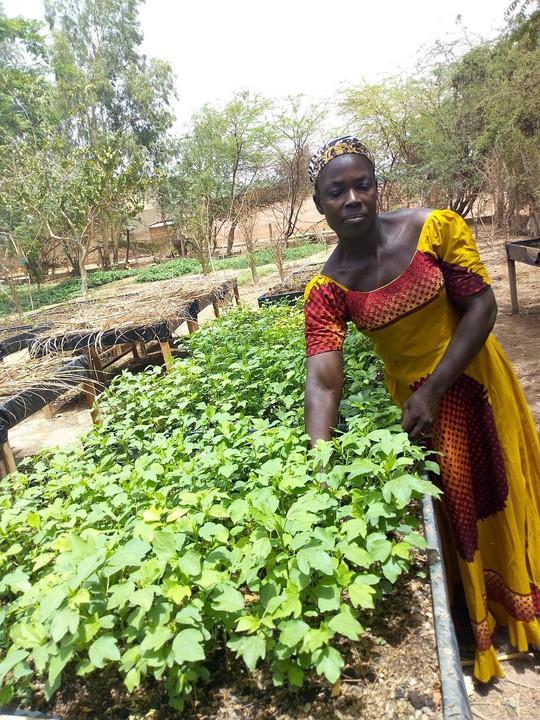 Thoát nghèo nhờ trồng rau hữu cơ - Ảnh 1.