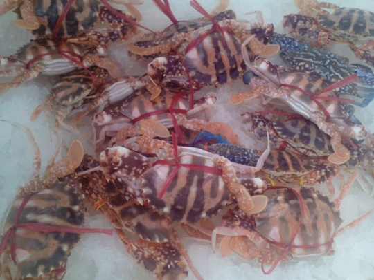 Khám phá về ghẹ đỏ, đặc sản nổi tiếng biển Việt Nam - Ảnh 3.