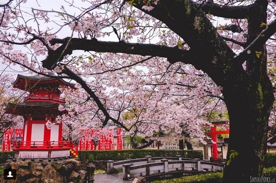 Những lý do bạn phải tới Osaka một lần trong đời - Ảnh 11.