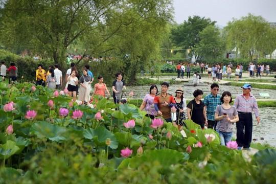 Những lễ hội mùa hè hấp dẫn tại Hàn Quốc - Ảnh 6.