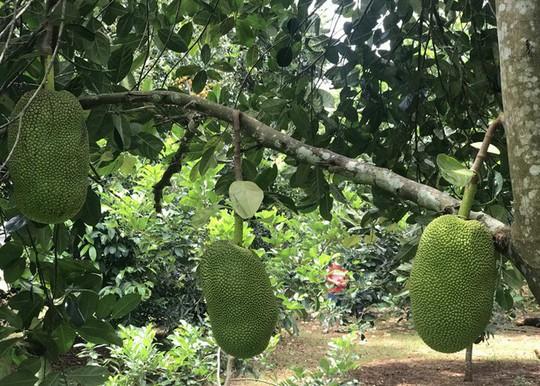 Càn quét thoả thích vườn trái cây chỉ với 50.000 đồng - Ảnh 5.