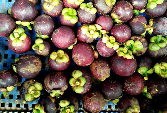 Càn quét thoả thích vườn trái cây chỉ với 50.000 đồng - Ảnh 6.